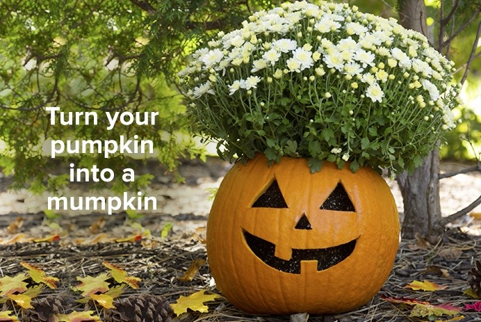 Turn your pumpkin into a mumpkin